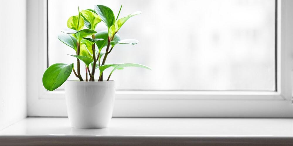 как подготовить окна к весне